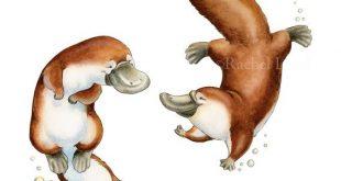 Platypus Love, Platypus Art, Platypus Watercolor, Australian Animal, Australia Nursery, Australia Art, Platypus Nursery, Nursery Art