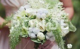 Delicate wedding bridal bouquet with cotton. floral arrangement of flowers Stock...