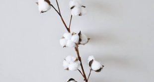 "Dried Cotton Branch 29.5"" Long 8 Cotton Balls Branches Cotton Ball Stalks Natural Rustic Wedding Dec"